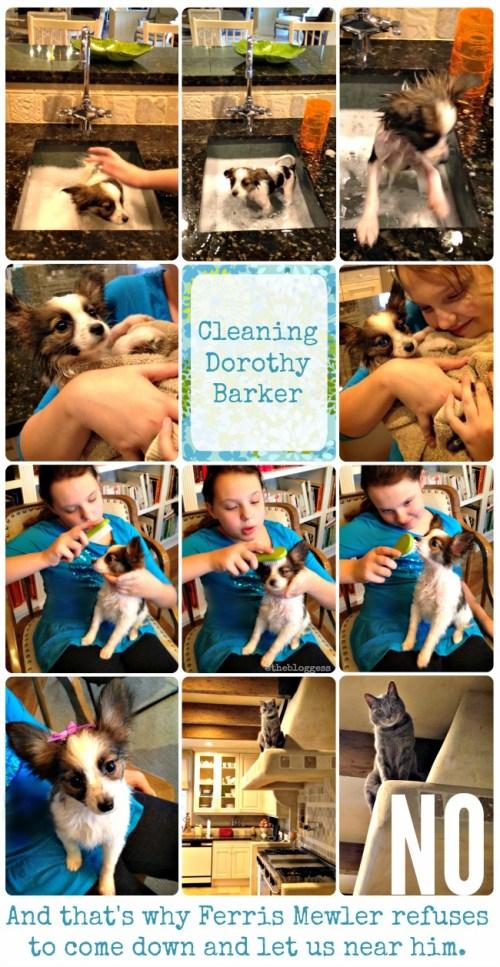 med cleaning dorothy barker