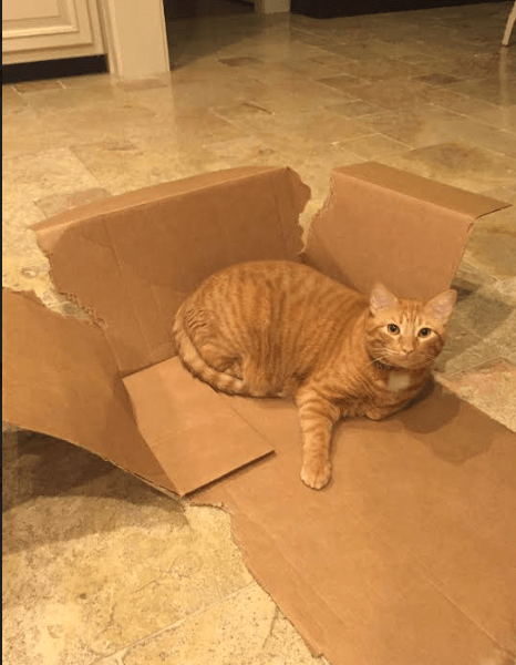"""Fuck you. Still a box."" ~ Hunter S. Tomcat"