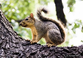 Squirrel Sideways