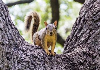 Squirrel Stare Down