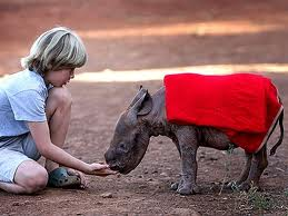 affectionate with a rhinoceros