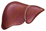 This is your liver.