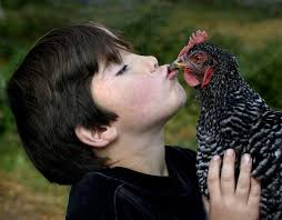 chickenkisssing