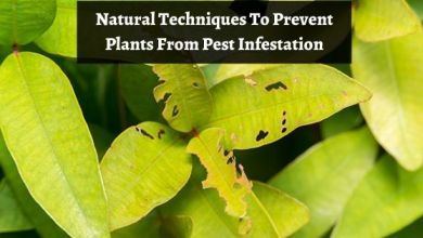 Photo of 10 Natural Techniques To Prevent Plants From Pest Infestation
