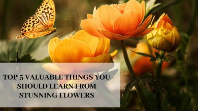 Photo of Top 5 Valuable Things You Should Learn From Stunning Flowers