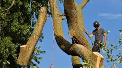 Photo of Why You Should Hire Tree Removal Services?