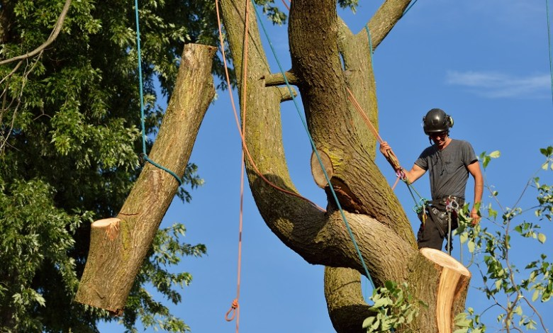 Melbourne Tree Removal