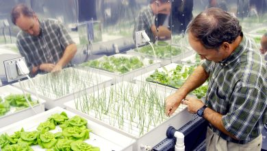 Photo of Hydroponics | The Future Of Farming And Cultivation Systems