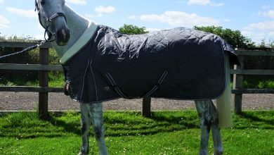 Photo of 6 Ways To Keep Your Horse Warm In Its Stable