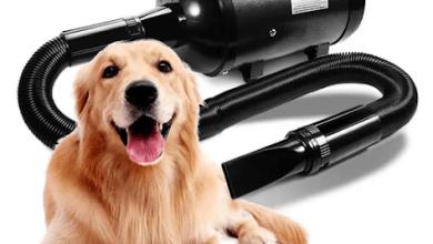 Photo of Choosing the Best Dog Grooming Dryer