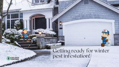 Photo of Getting ready for winter pest infestation!