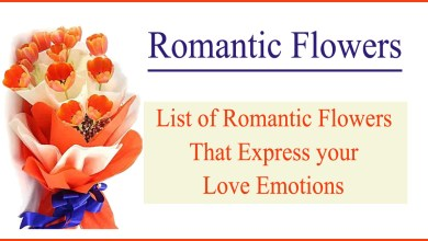 Photo of List of Romantic Flowers that Express your Love Emotions