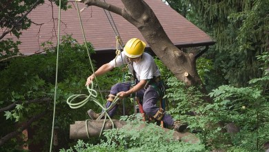Photo of Choose the Best Tree Removal Service Melbourne Australia in 2021