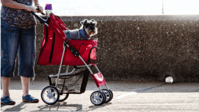 Photo of How to Choose Your First Baby Stroller?
