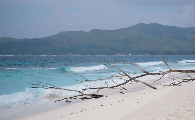 A Guide To Cousin Island In The Seychelles The Blonde Abroad