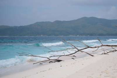 A Guide to Cousin Island in the Seychelles • The Blonde Abroad