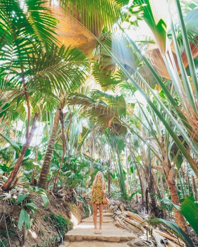 Tips for Buying a Coco De Mer in the Seychelles • The ...