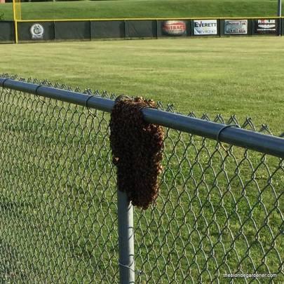 bee-swarm-at-ballfield