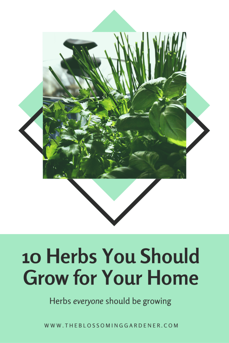 Herbs You Should Grow