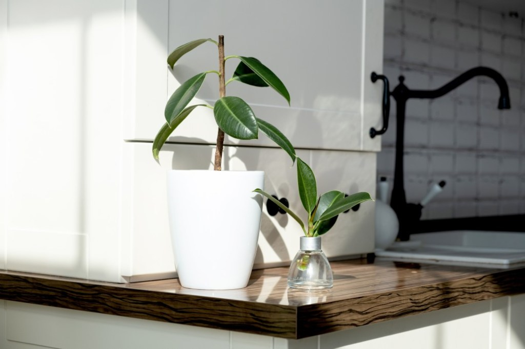 A jar of propagated houseplant next to a potted houseplant on a kitchen counter