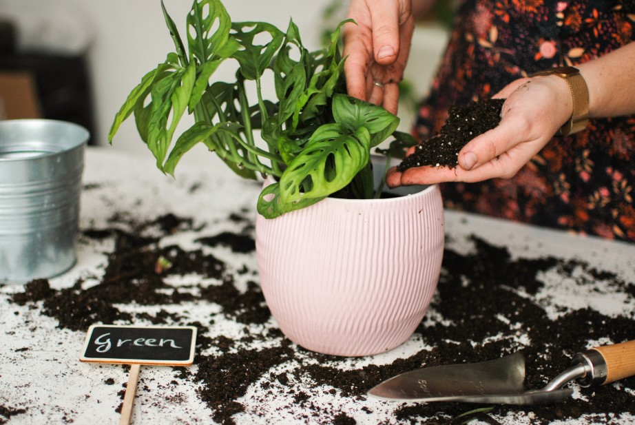 set of hands pouring potting soil into pot with houseplant
