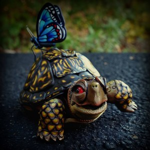 Turtle by Melissa Terlizzi