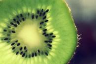 Kiwi - Andrea Tobar ©