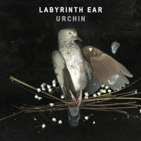 Bands to watch: Labyrinth Ear | The Blue Walrus Labyrinth Ear Band