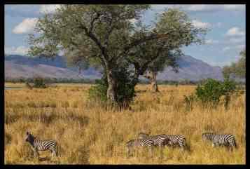 Long view towards the Zambian escarpment