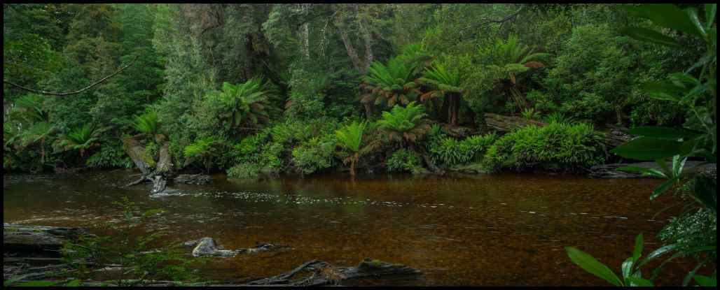 Styx River Tasmania tanin coloured water