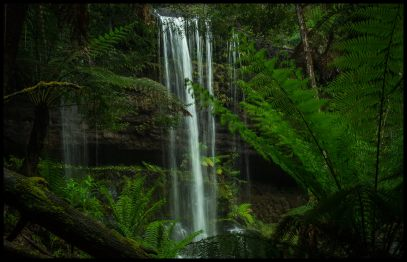 Waterfall framed by Tree Fern