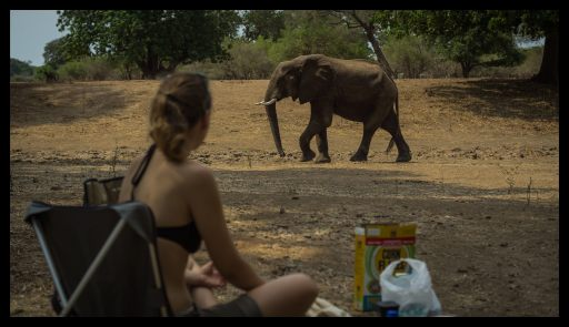 Breakfast with elephants, Nyamepi campsite Mana Pools