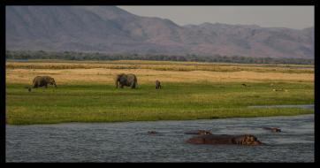 Late afternoon Zambezi-view of the Zambian escarpment from Mana Mouth, Mana Pools NP