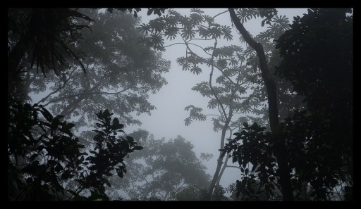 Beautiful Cloud Forest at Espino Blanco, Turrialba