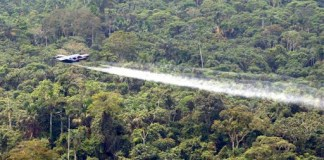 Coca spraying in Colombia
