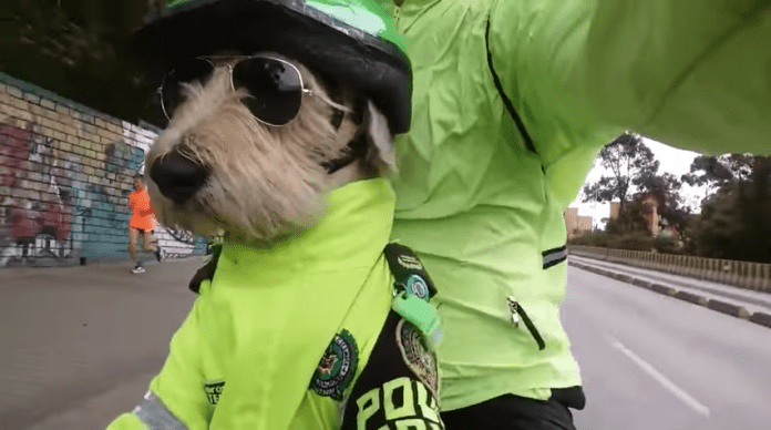 Police Dog Viral Video Colombia
