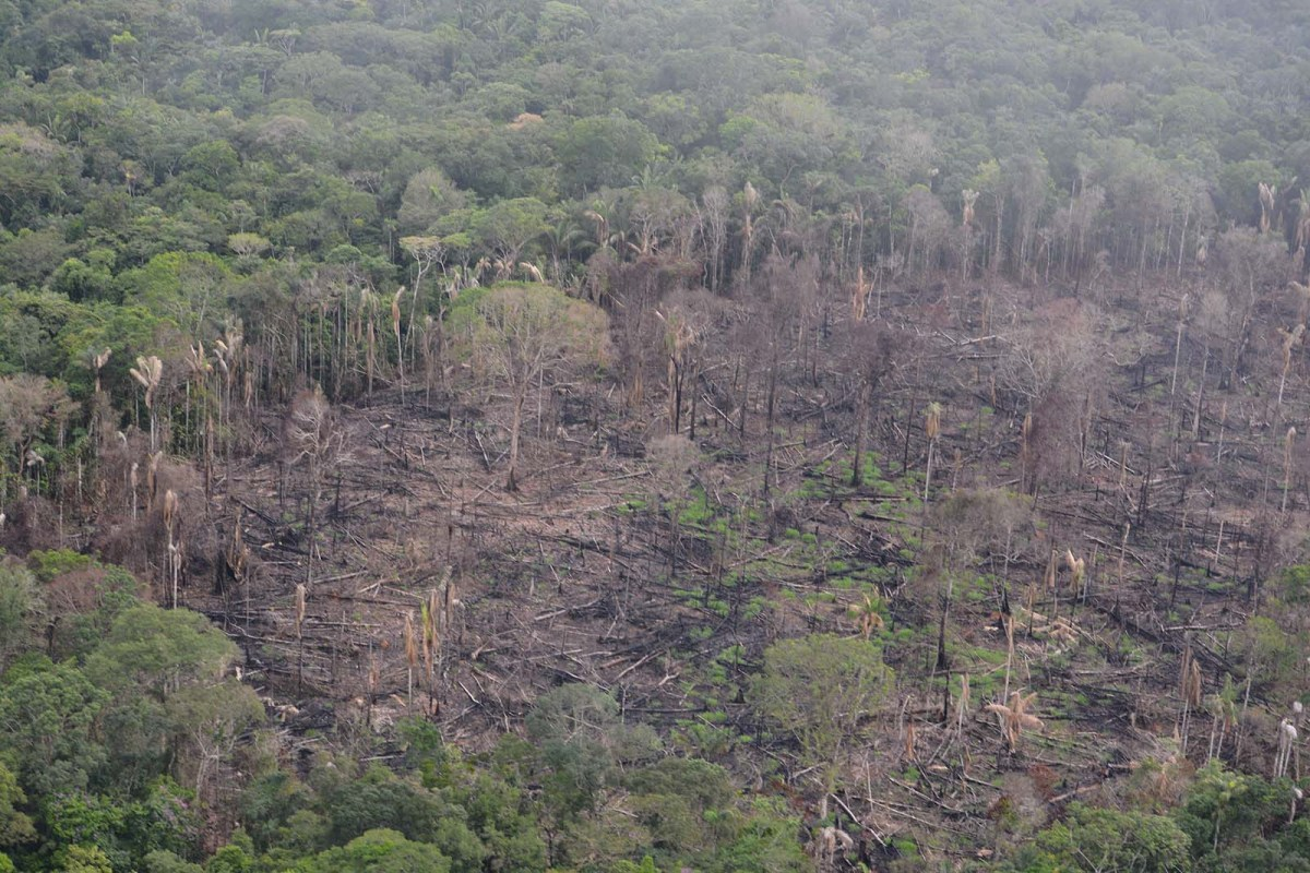 Deforestation in Colombia: The forest is burning