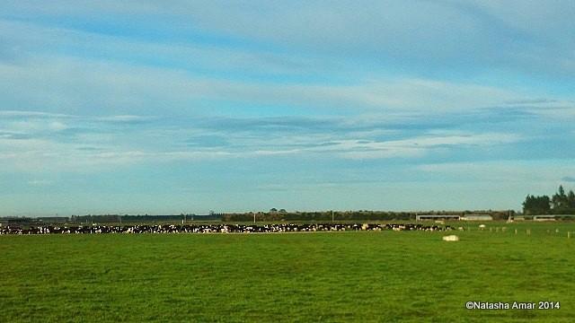 Canterbury plains TranzAlpine Scenic Journey