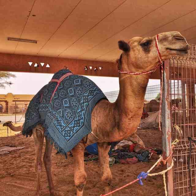 Win a 2 night stay at Al Ain Rotana