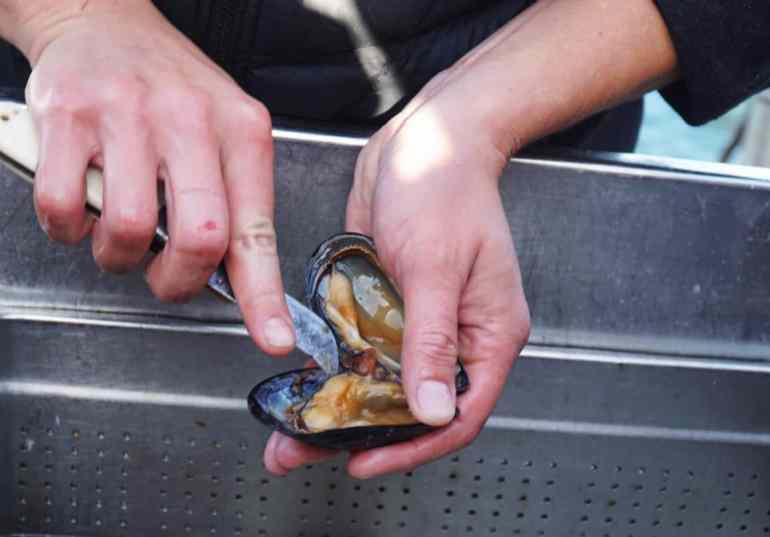 Mussel expedition at Musselbaren Ljungskile