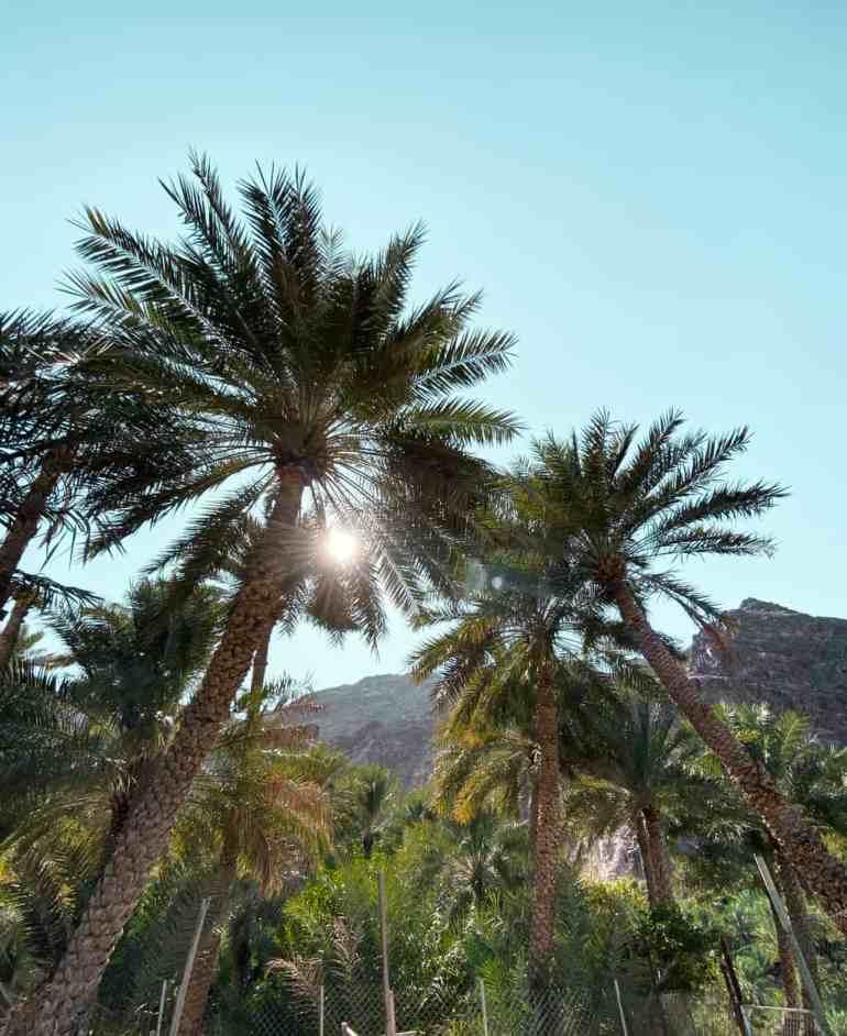 Wadi Shees Nature Trail Date Palms