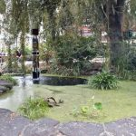 Fountaian and pond near stage at Idaho Botanical Gardens
