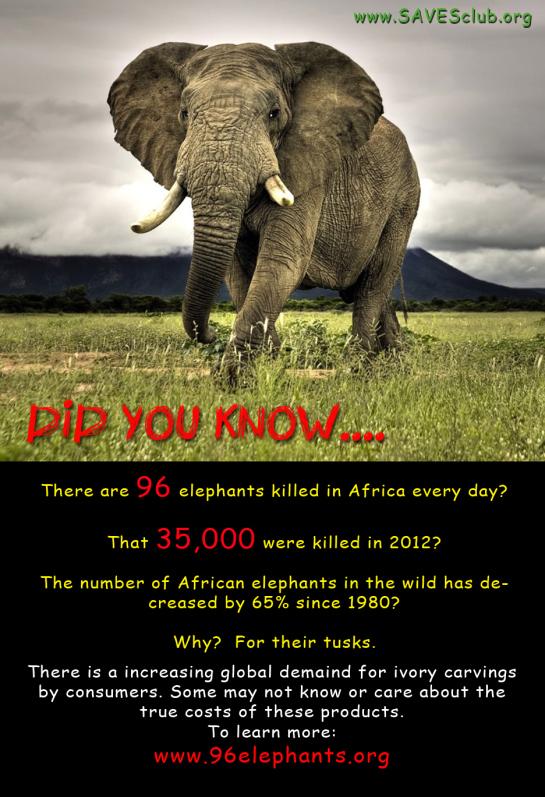 96 elephants killed every