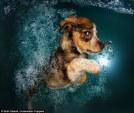 pups_diving7