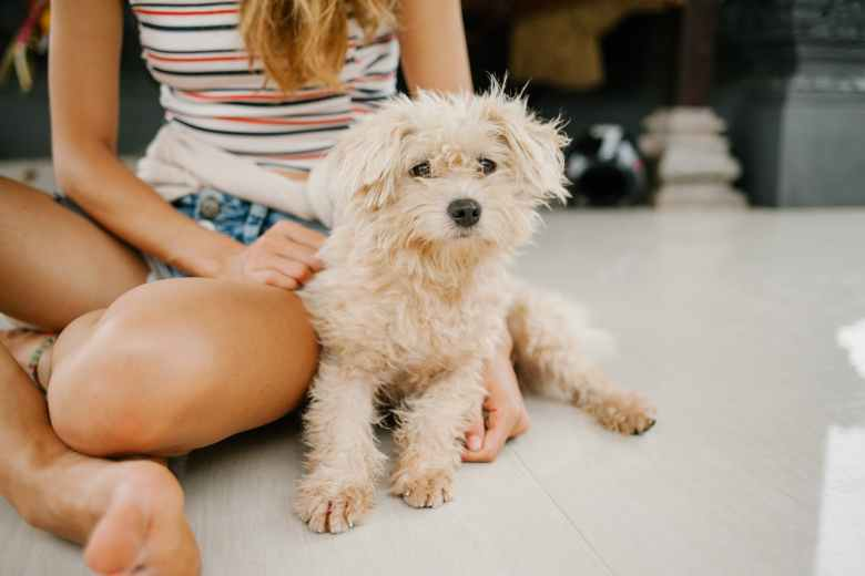 woman sitting with miniature poodle on floor