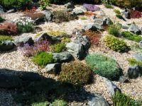 Transforming a bluebell zone into a rock garden  The ...