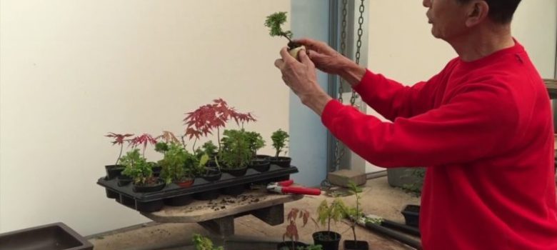 Creating Starter Tree for Bonsai
