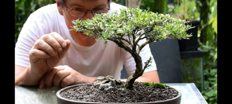 Five tips for starting in bonsai
