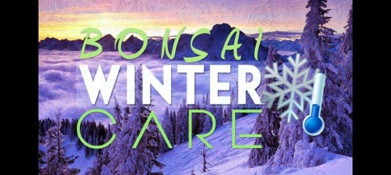 Bonsai Winter Care