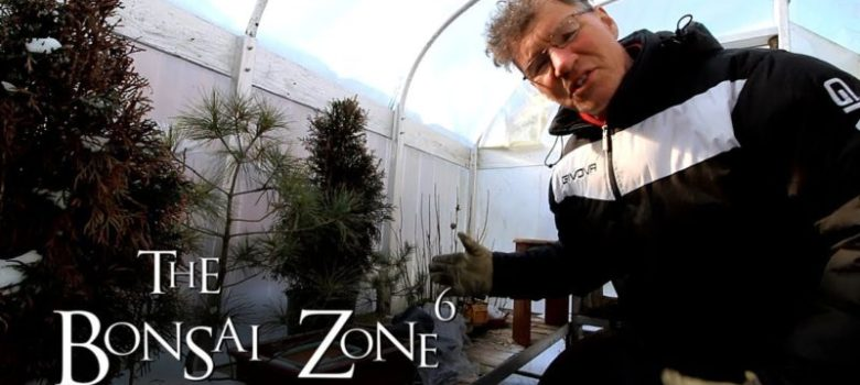 Detail work to Ficus microcarpa Bonsai Part 2